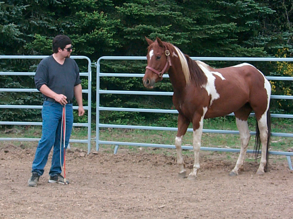 best horse training methods